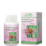 Echinacea FORTE BioShopRomania