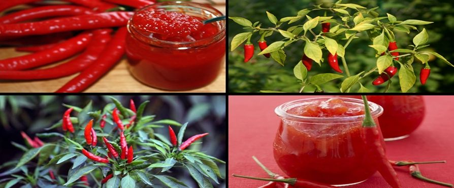 hot chilli jam Blog BioShopRomania